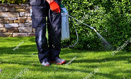 spraying the lawn with pesticides